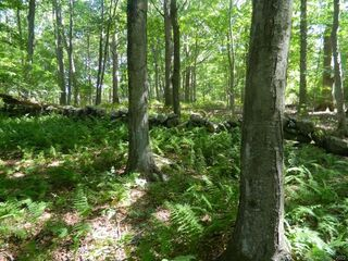 Photo of real estate for sale located at 184 Shore Road Old Lyme, CT 06371